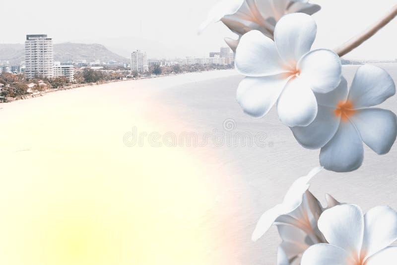 Plumeria tropical de fleur Vue de mer et fond de plage photos libres de droits