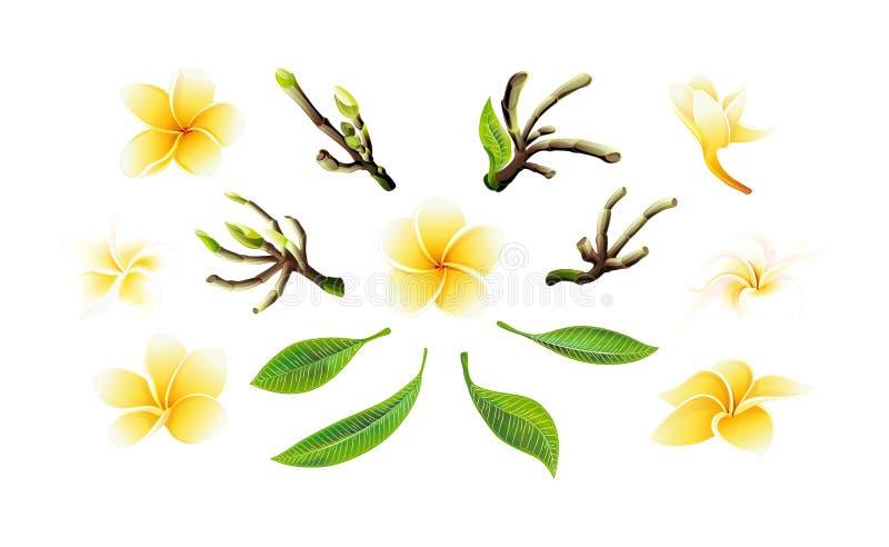 Plumeriablommor, filialer och sidor in för tropisk vektor ställde gula för kort vektor illustrationer