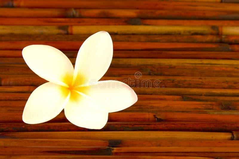 Plumeriablume auf Bambus stockfoto