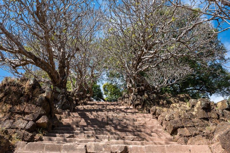 Plumeriablumenbäume an den Ruinen des Bottich Phou-Khmertempels, Laos stockbild
