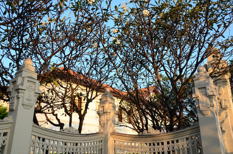 Plumeriabomen in tuin stock fotografie