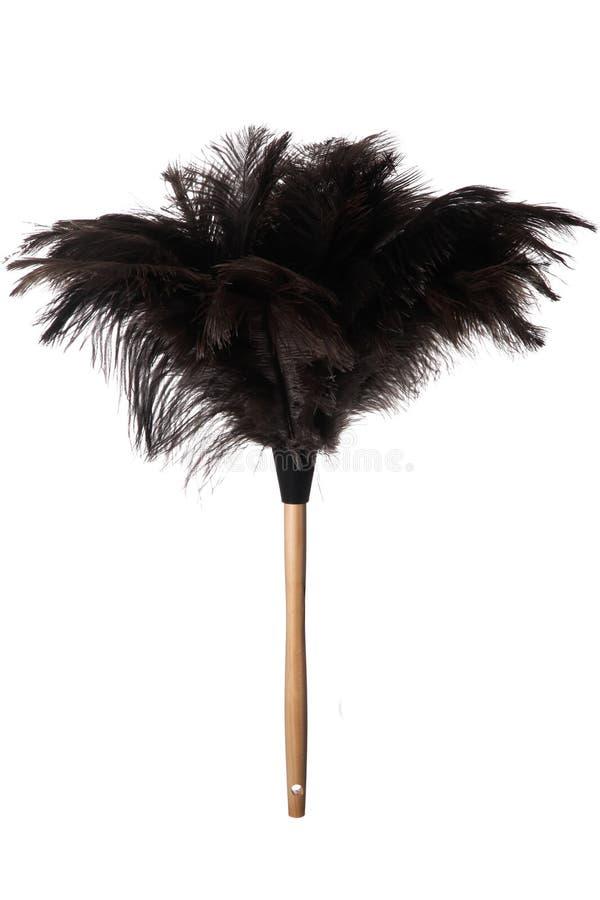 Plumero de la pluma de la avestruz fotografía de archivo libre de regalías