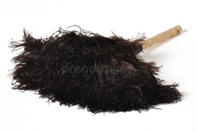 Plumero de la pluma de la avestruz imagen de archivo