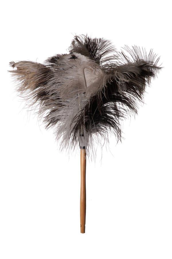 Plumero de la pluma de la avestruz - aislado imagen de archivo