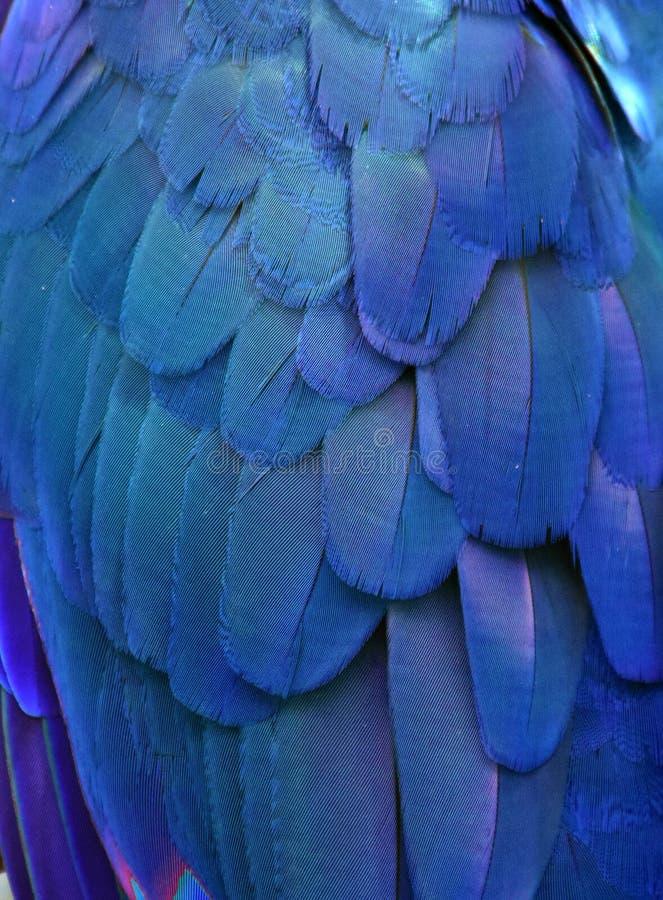 Plumes bleues d'ara photos stock