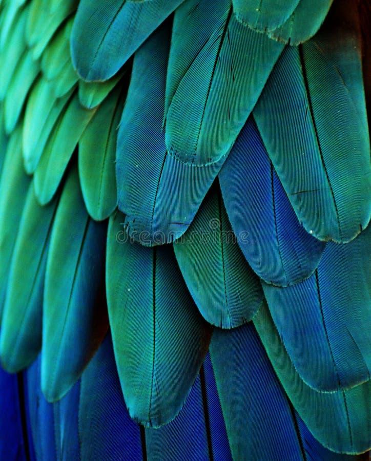 Plumes bleues/de vert ara photo libre de droits