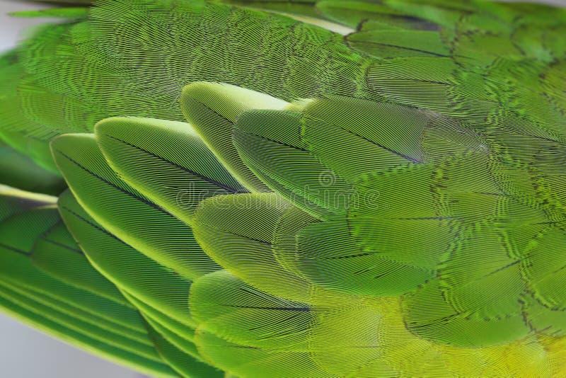Plumes colorées fond, fond de nature et texture photo stock