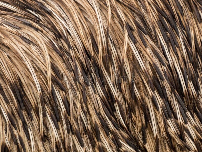 Plumes d'autruche de texture de fond photo libre de droits