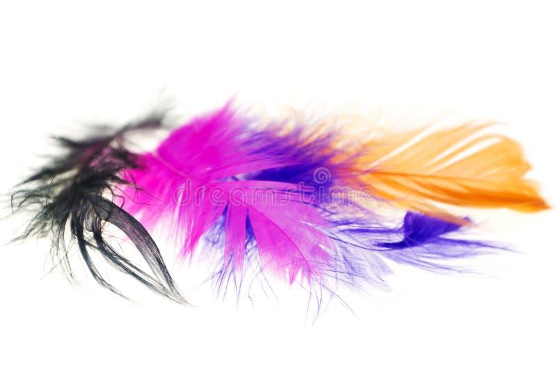 Plumes d'oiseau colorées sur des plans rapprochés d'un fond de blanc photos libres de droits