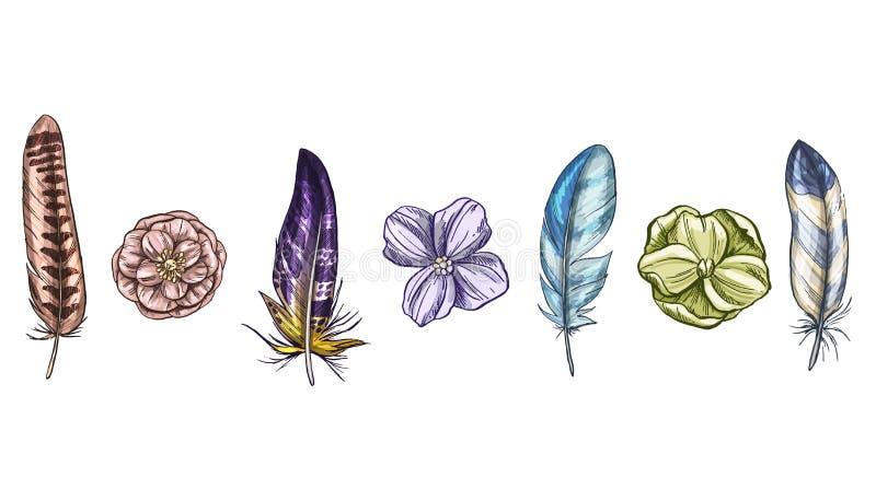 Plumes et fleurs d'oiseau détaillées colorées d'isolement sur le fond blanc Un ensemble de beau plumage d'oiseau Illustration de  illustration libre de droits