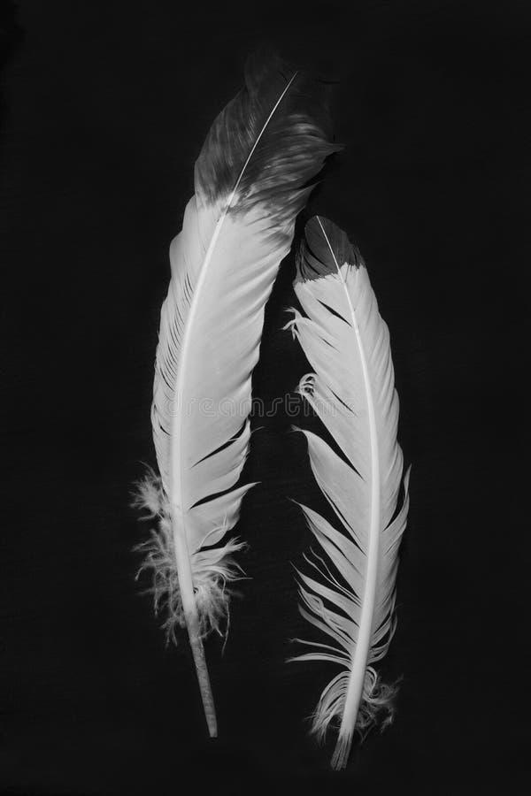 Plumes indiennes indigènes noires et blanches sur un fond noir image stock