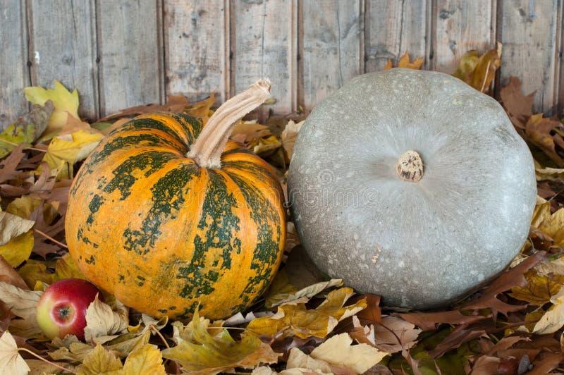 Plumpkins Stock Photography