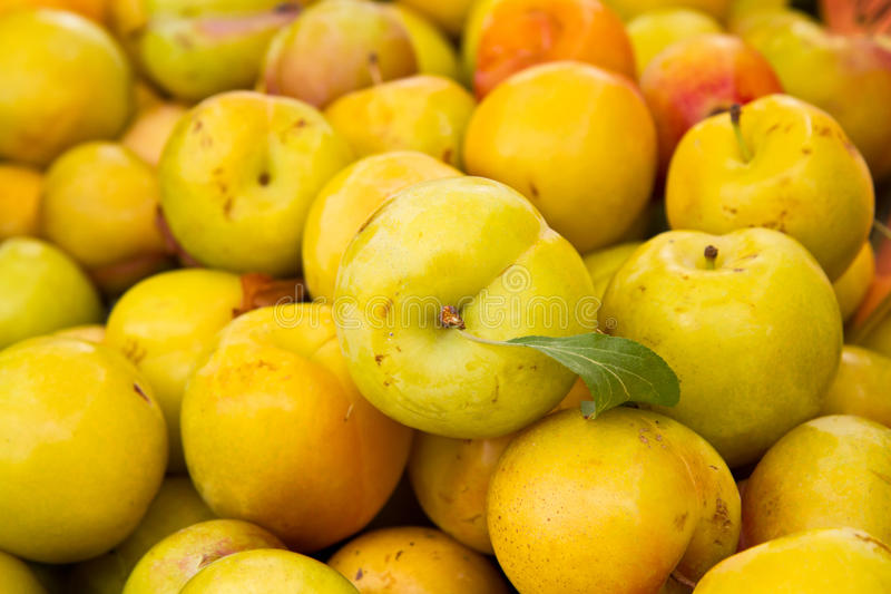 Download Plums stock photo. Image of yello, ripe, produce, green - 15376836