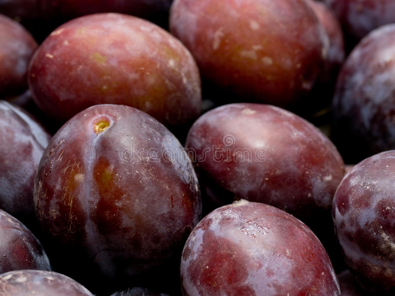 Download Plums stock photo. Image of purple, fruits, organic, background - 21106404