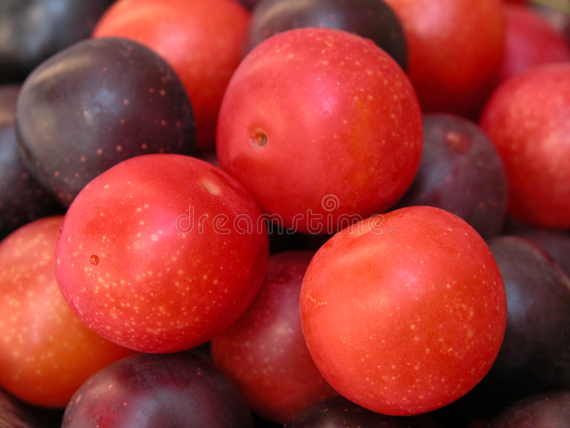 Download Plums stock photo. Image of taste, summer, calorie, diet - 225644