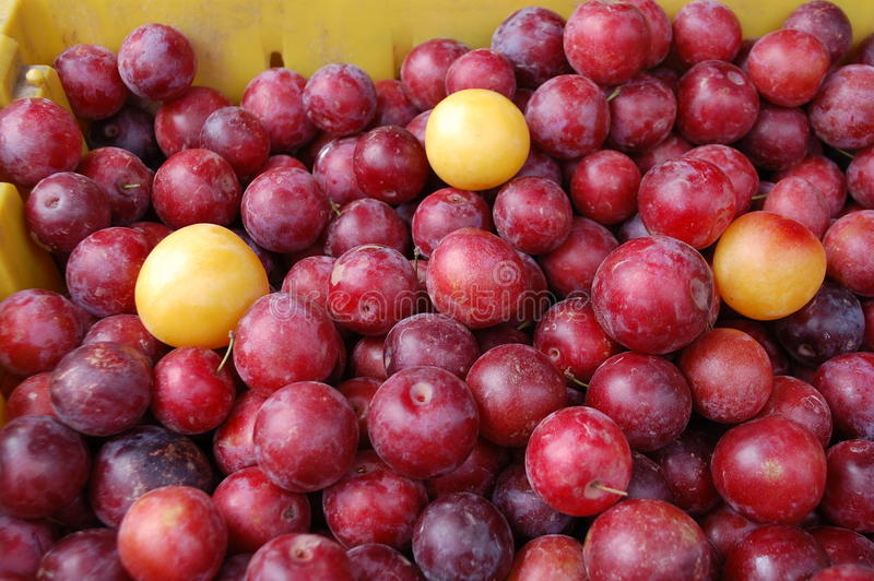 Download Plums stock image. Image of sweet, fruit, prune, plums - 25807199