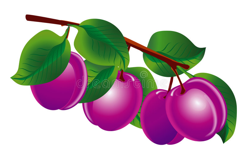 Download Plums stock vector. Image of nature, appetizing, illustration - 2580812