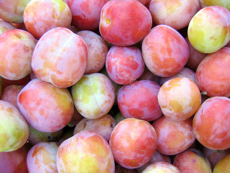 Plums stock photography