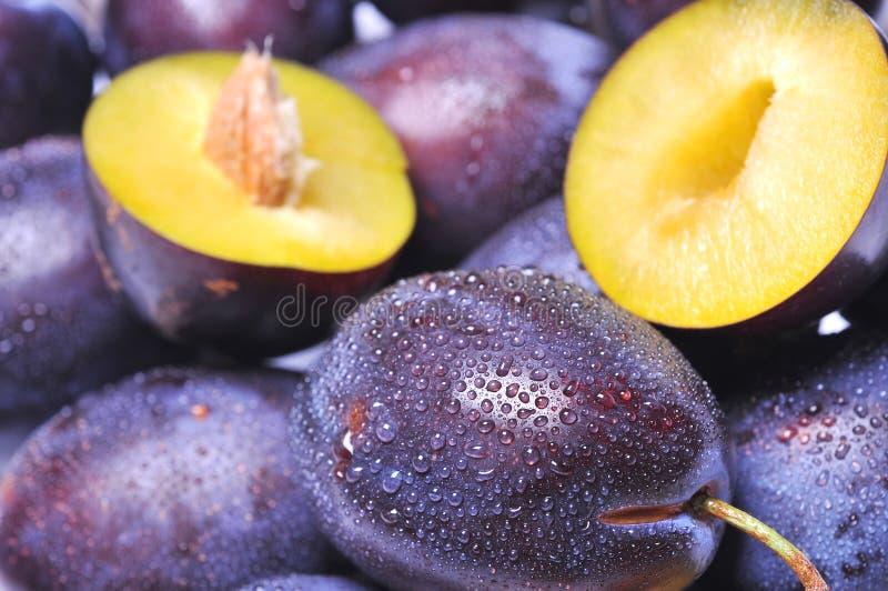 Download Plums stock image. Image of summer, desert, diet, juice - 6290131