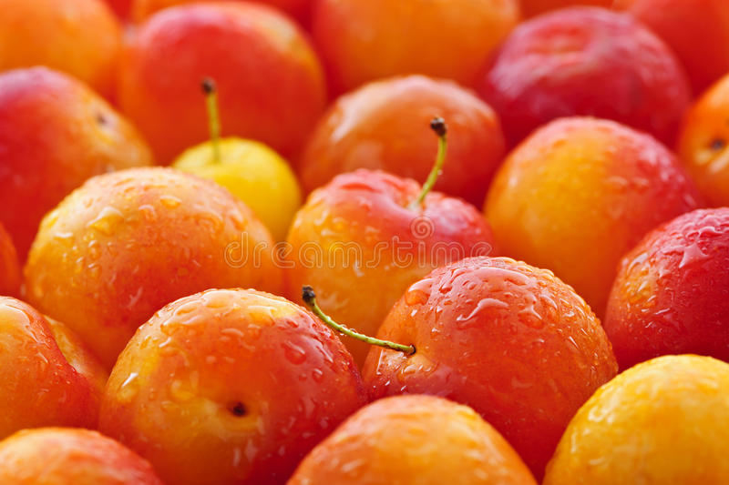 Download Plums background stock photo. Image of delicious, market - 21382758