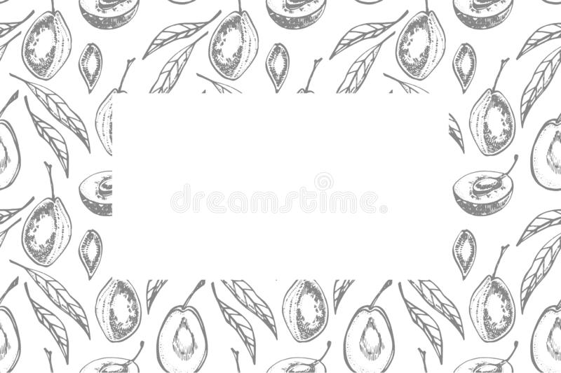 Plums hand drawn illustration. Ink sketch. Hand drawn illustration. Isolated on white background. Healthy organic food. Farm market products. Best for package royalty free illustration