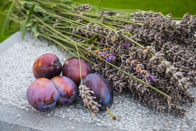 Plums with lavender flowers royalty free stock photography