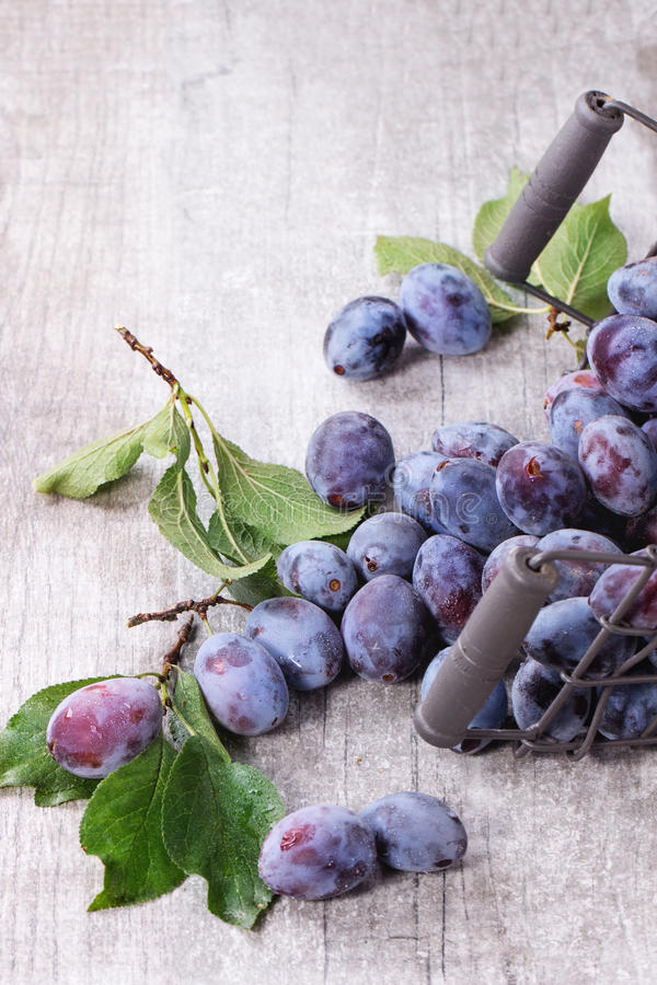 Plums with leaves. Ripe purple plums with leaves in inverted metal decorative basket over gray wooden background royalty free stock photography