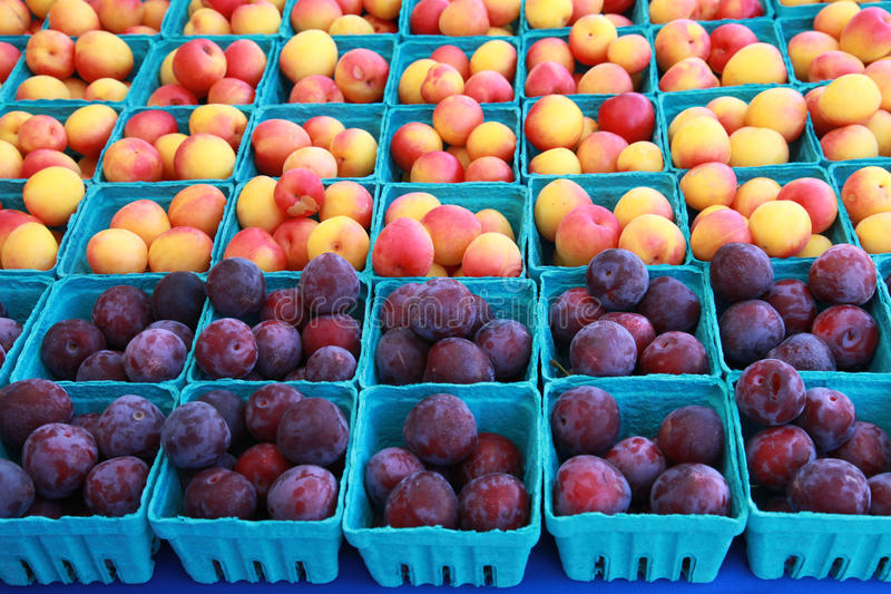 Plums and Nectarines. Cartons of fresh plums and nectarines for sale at the local farmer's market stock images