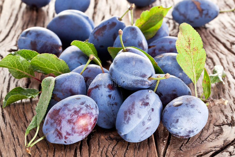 Plums on an old wooden table. Plums on an old wooden table in the garden royalty free stock image