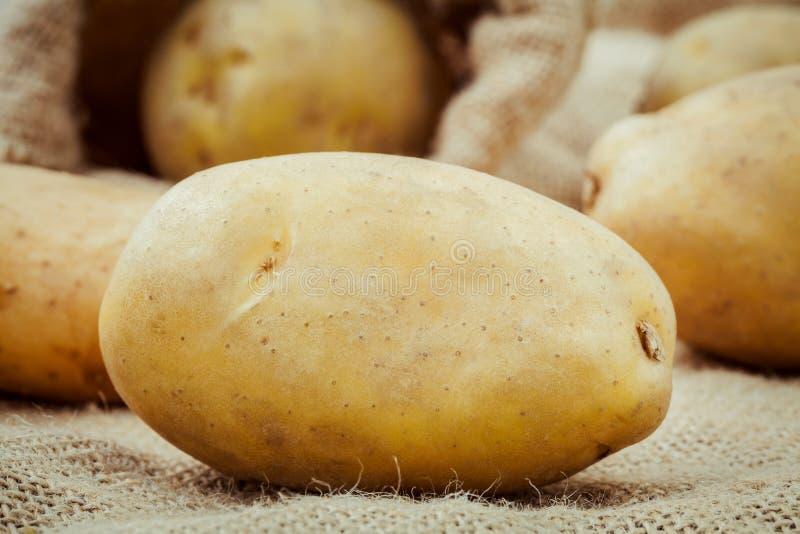 Plundrar nya organiska potatisar för Closeup på hampa bakgrund Nya mummel fotografering för bildbyråer