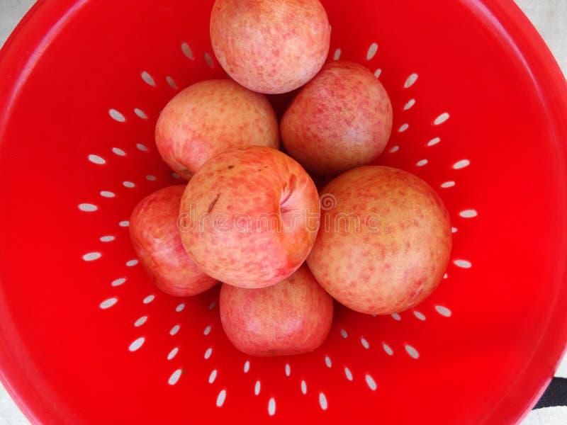 Pluot Dapple dandy, Prunus 'Dapple dandy' fotografia royalty free