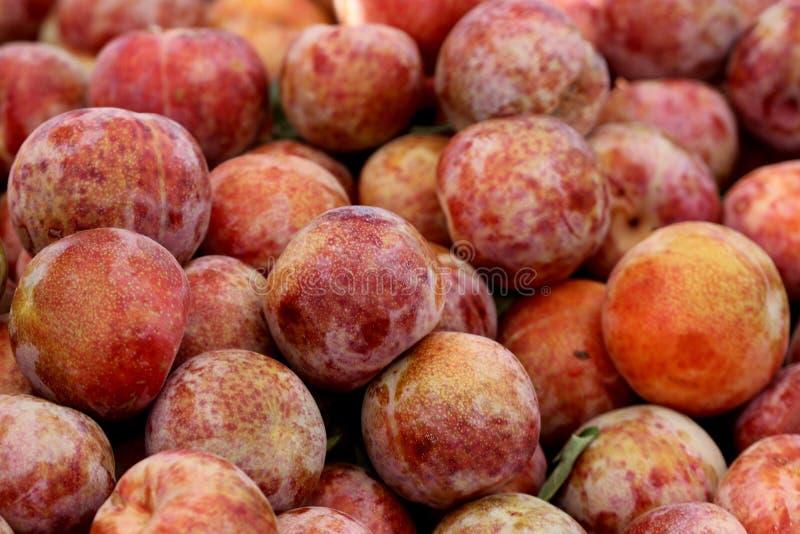 Pluot Dapple dandy, Prunus 'Dapple dandy' zdjęcie royalty free