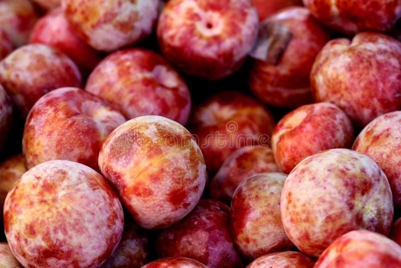 Pluot Dapple dandy, Prunus 'Dapple dandy' obrazy stock