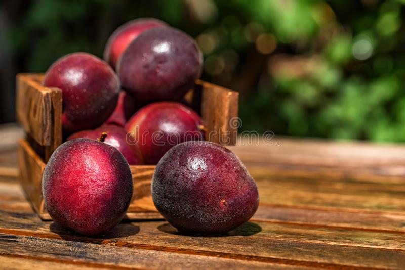 Pluot, mix of plum and apricot in wooden box close royalty free stock image