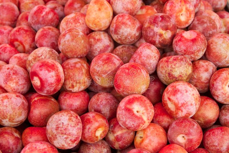 Download Pluots stock image. Image of food, hybrid, fruit, produce - 26021399