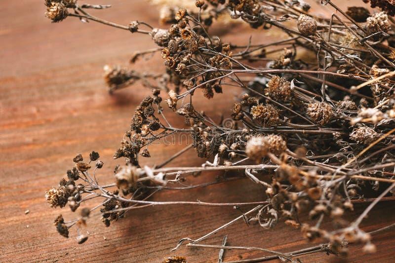 Pluralité de fleurs organiques et de plantes sèches en gros plan sur le fond en bois image stock