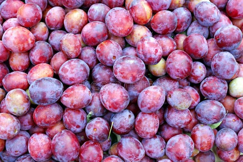 Pluralité de fruit rouge de prunes photo stock