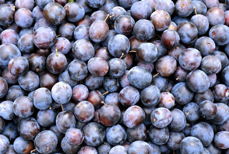 Pluralité de fruits bleus de prunes d'épines photo stock