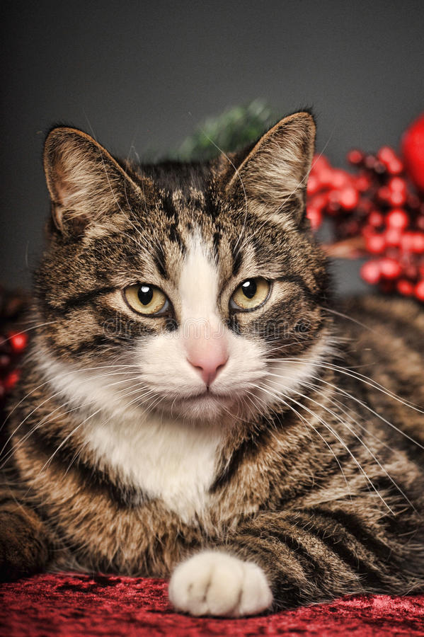 Plush cat. On a New Year's background stock photos