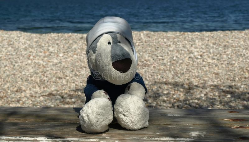 Plush husky on the beach. Taken with DSLR camera on Vis Island, Croatia royalty free stock images