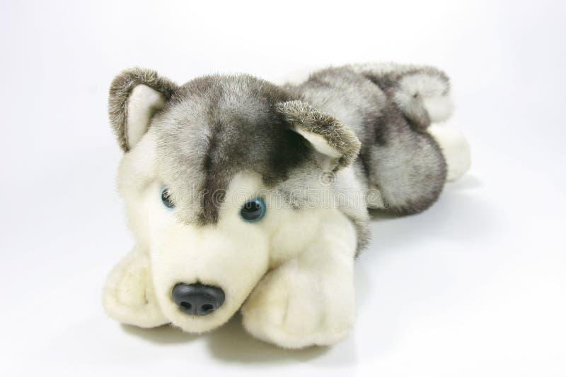 Plush husky dog. Cute plush husky dog on white background royalty free stock photo
