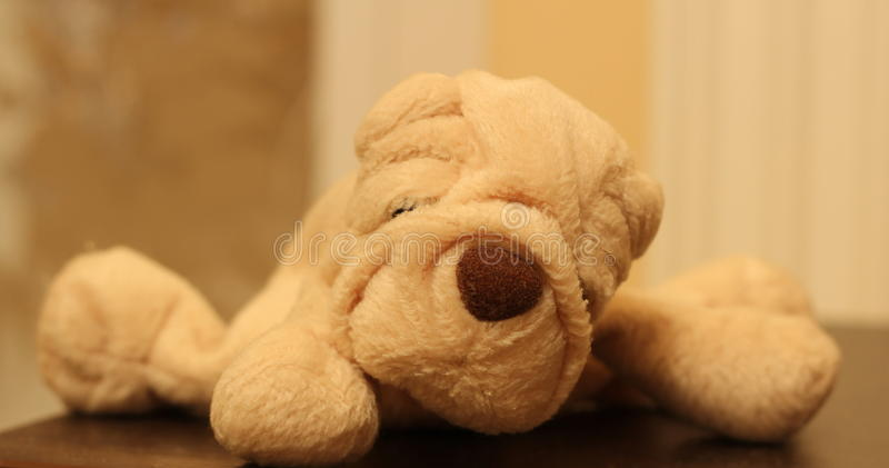 Plush puppy royalty free stock image