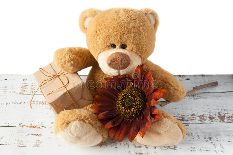 Plush soft toy teddy bear with flowers brown red sunflower and gift box. Greeting card. Children`s cute background for gift bags. Congratulations on Valentine` royalty free stock images