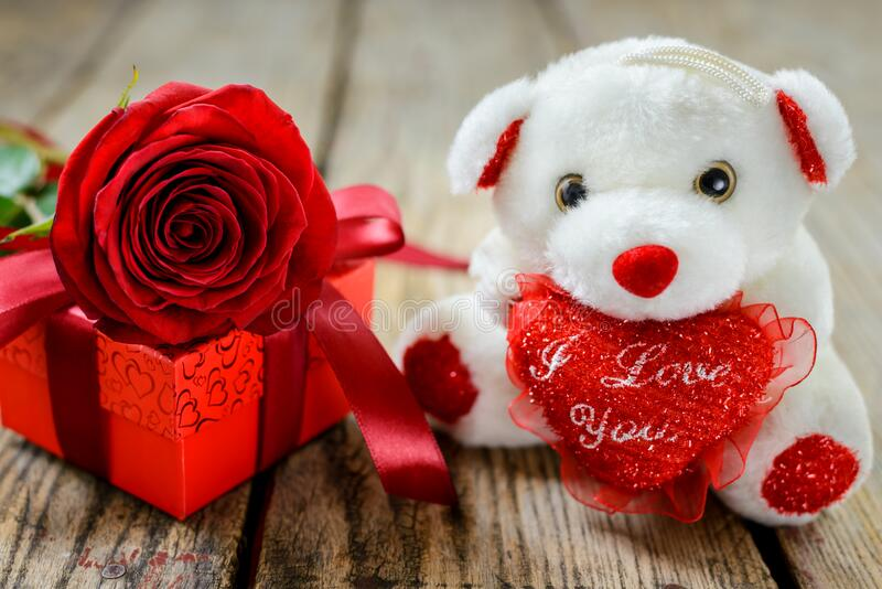 Plush toy bear, gift and red rose. Valentines day. Valentine`s Day and Women`s Day concept. White plush toy bear, gift box and red rose on wooden table stock photos
