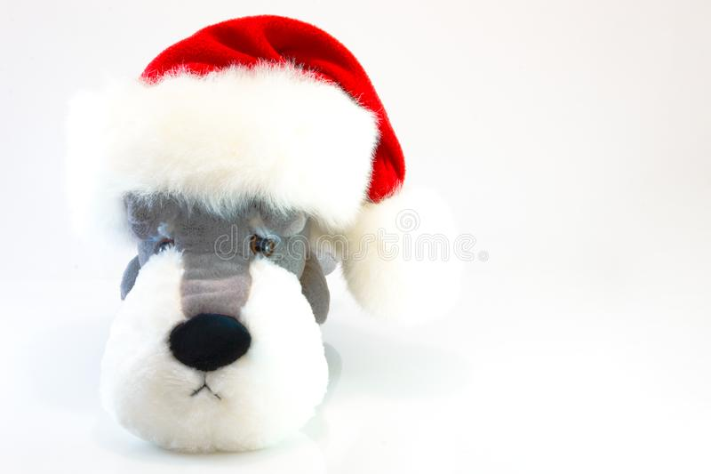 plush toy dog on white background. This has clipping path. stock photo
