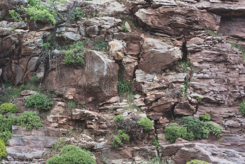 Plusieurs arbres verts sur le flanc de montagne photographie stock libre de droits