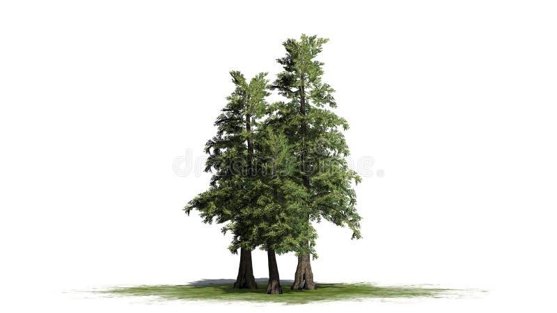 Plusieurs divers arbres de cèdre de rouge occidental illustration stock