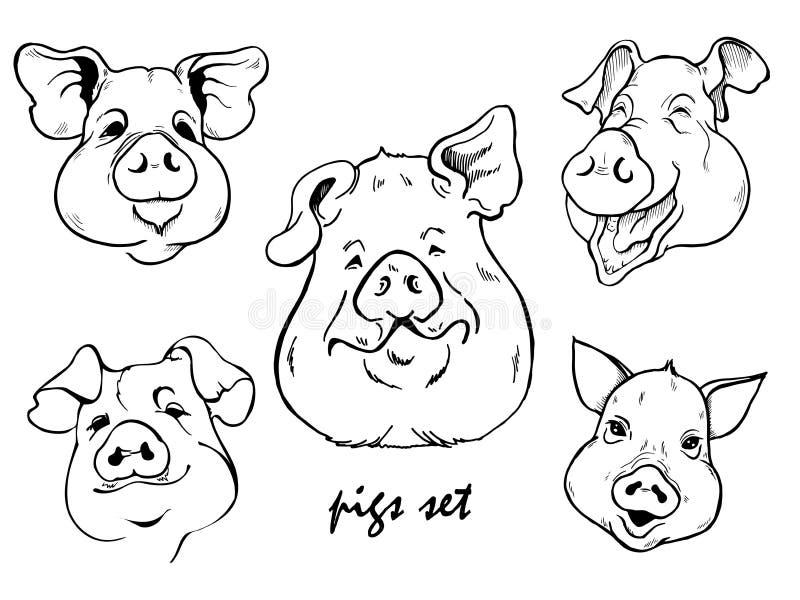 Plusieurs portraits des porcs noirs et blancs illustration libre de droits