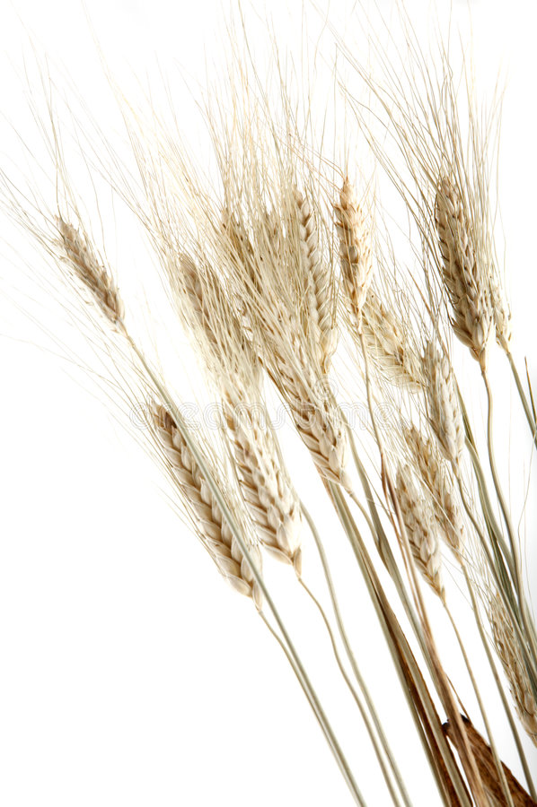 Plusieurs transitoires de blé photographie stock