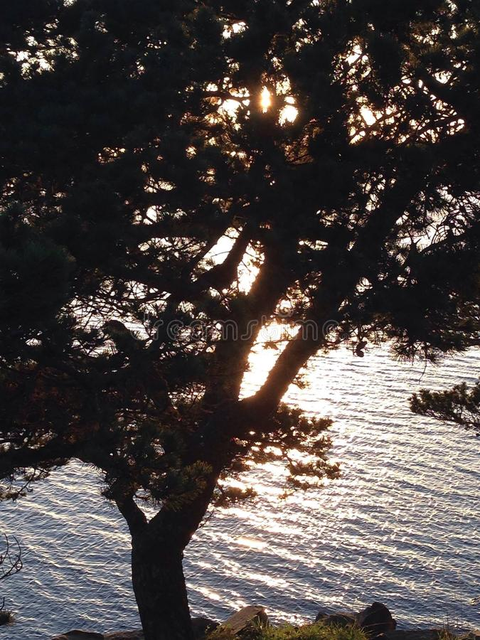 pluskoczący wody i drzewa wierzchołki fotografia stock